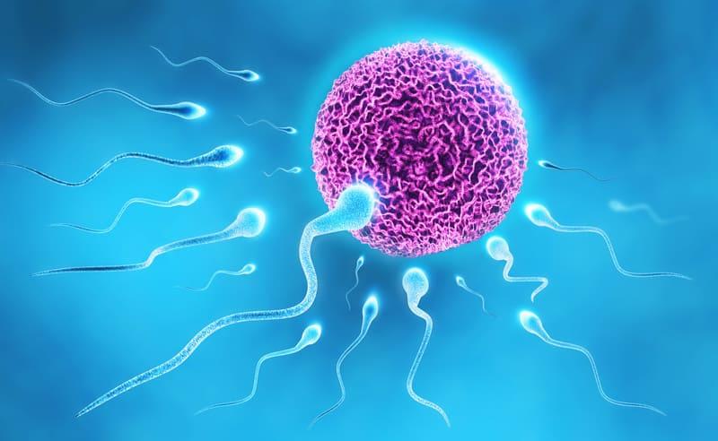 Infertilità, il seme lo acquisto online